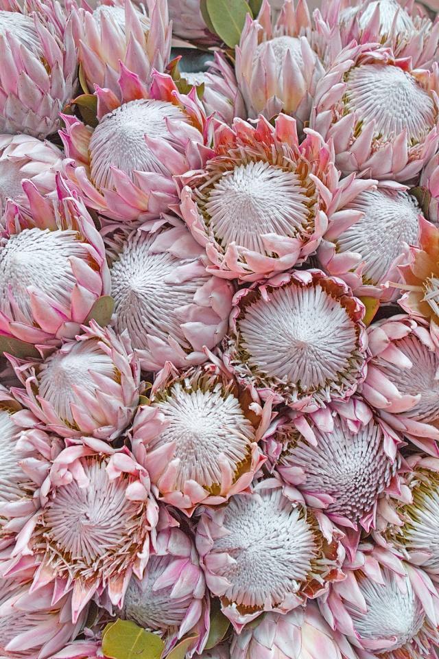 Flowers0003